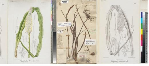plant specimens